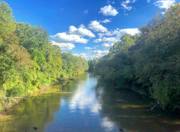 Green trees lining Wolf River with blue skies and fluffy clouds