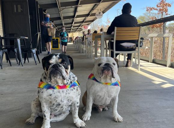 two white bulldogs with rainbow bandanas sitting on a long veranda-style patio at Crosstown Concourse